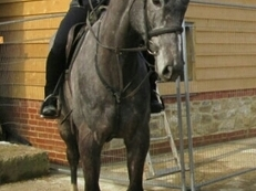 Looking for a horse to ride in Haywards Heath or surrounding areas