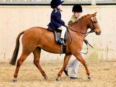 SUPERB LEAD REIN PONY