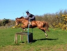 153cm LOVELY ALL ROUNDER MARE