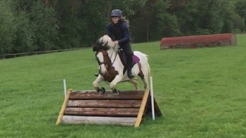 Super 9yr old 14hand sports pony