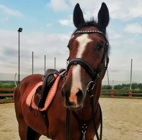 Looking for a horse to loan/hack/excersize in Somerset