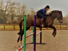 loves to jump, beautiful IDxTB mare with huge potential