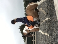Beautiful 130cms pony for sale