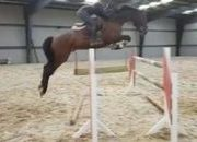 SUPER EVENTER / SHOWJUMPER