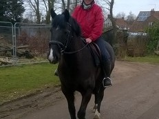 15.2 6yo stunningly beautiful black mare really lovely personality