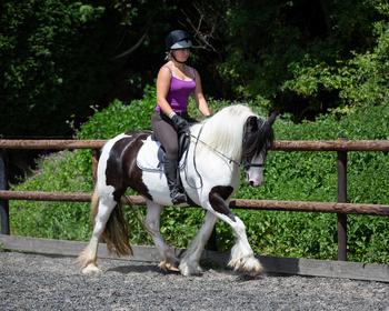 Family Horses for Sale   Horsemart