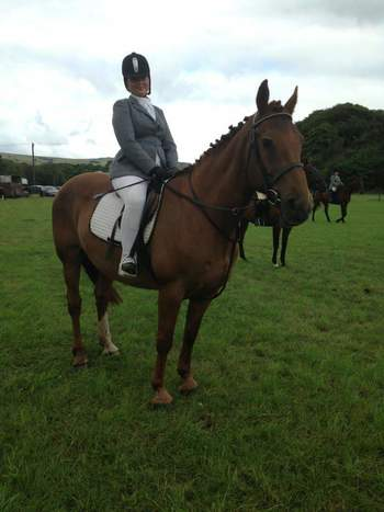 IRISH DRAUGHT 16'3 MARE FOR LOAN