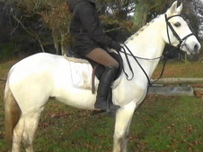 Allrounder Conniemara, For Sale Dorset