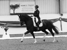 International Grand Prix dressage groom