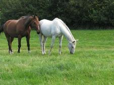 Retirement Livery Stabled or Grass options