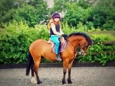 12.2 part Welsh 6yrs bay gelding