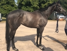 Huge potential in any sphere. Unspoilt youngster