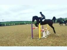 Talented Eventer/All-rounder For Sale