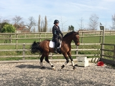 Dressage / Flatwork lessons