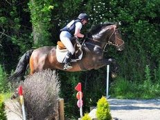 16.1hh Stunning Riding Club 13yr Old