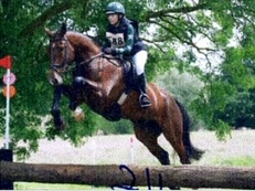 Hunter/ all rounder for sale
