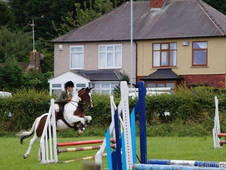 Fantastic working hunter pony for part loan!