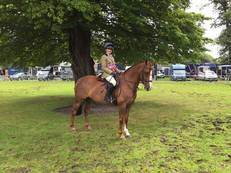 Fantastic Working Hunter Pony/ HOYS Potential
