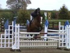 Proven Winner with Professional & Amateur, 16.1hh, 12yo