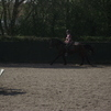 Him Cantering to a Jump