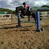 14.2 Project Pony, Welsh D, 6yrs old