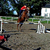 Welsh section c mare 14.1hh great jumper!