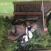Superb hunter and eventer sadly for sale