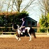 Amazing 13.2hh Skewbald would BSJA