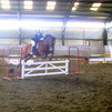 Show Jumping - Doesn't mind fillers, gate etc.