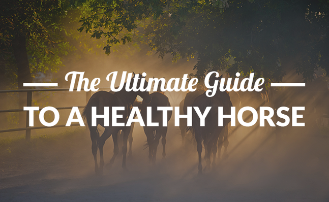Horse Health (The Ultimate Guide)