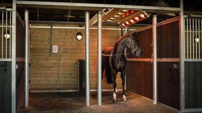 Horse Solariums - The new craze?