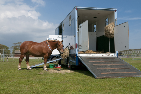 The 3.5 Tonne Horsebox: A Buyer's Guide