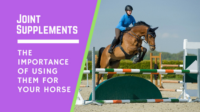 The Benefits of Using Joint Supplements for Your Horse