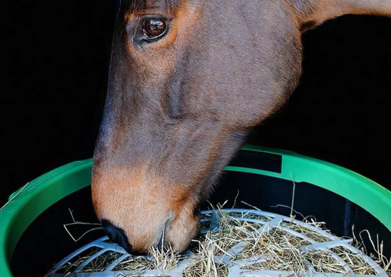 Improve the way you feed your horse