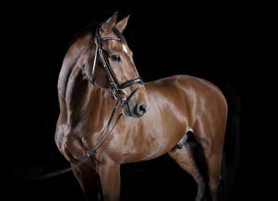 Guest Post - What should you do if your horse injures another person?
