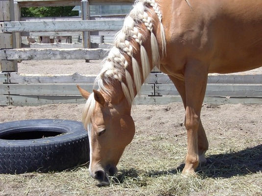 How To Plait Your Horse's Mane