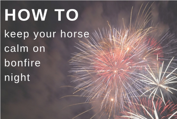 How To Keep Your Horse Calm On Bonfire Night