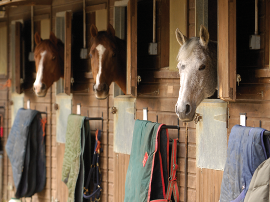 Avoiding Common Mistakes as a New Livery Yard Owner