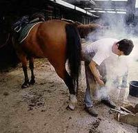 Equine Health - Equine Hooves