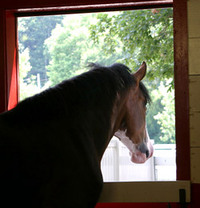 How to Care for a Horse on Stall Rest