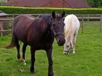 Share Horse Scheme: Benefits of Loaning Out a Horse
