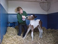 How to Care for an Orphan Foal