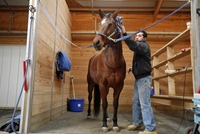 Tips For Grooming Your Horse Before a Horse Show