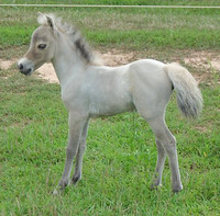 Caring for Orphaned Foals & Young Stock