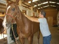 Equine Complementary Therapy Guide: Chiropractic Care