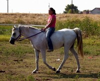 How to Ride a Horse in a Halter