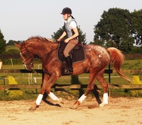 How to choose a horse exercise plan