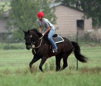Preventing Delayed On-Set Muscle Soreness (DOMS) in horses