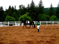 Tips on retraining ex-racehorses