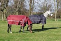 How to Find the perfect horse rug by Masta Rugs